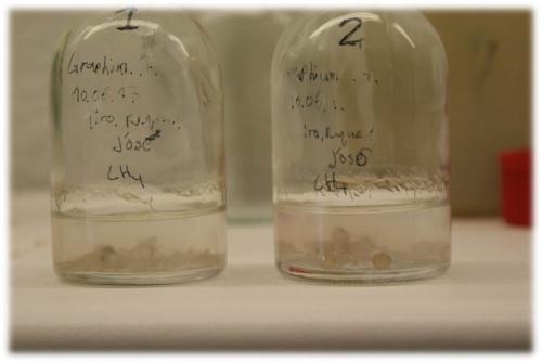 Investigadores de la UVa demuestran por primera vez la capacidad de un hongo para degradar metano